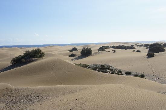 Hotel Europalace: dunes