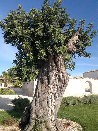 Torre Dantona Country Hotel: Tree in the garden