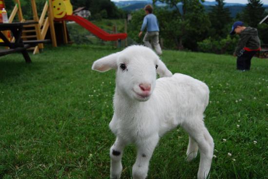 Urska Tourist Farm : lamb