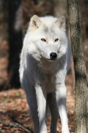 Lakota Wolf Preserve: pretty Takaani