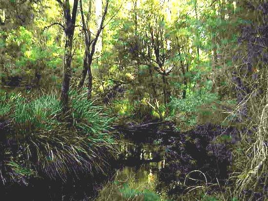 Northcliffe, Australia: Karri Forest