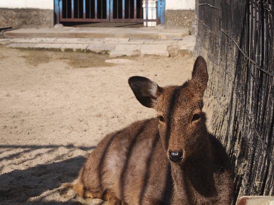 Oike Park : 鹿さんもいるよ