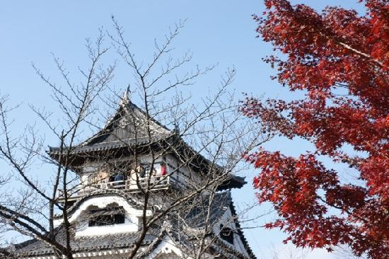 Inuyama, Japan: 紅葉と天守閣