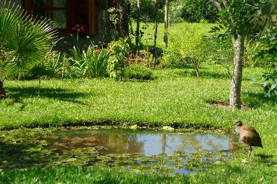 Detalle jard n estanque picture of rancho inambu for Estanque jardin