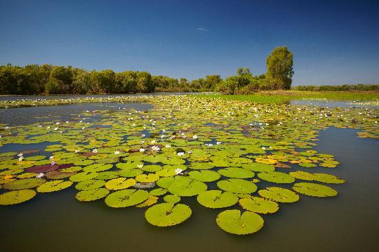 Davidson's Arnhemland Safari Lodge: The billabong