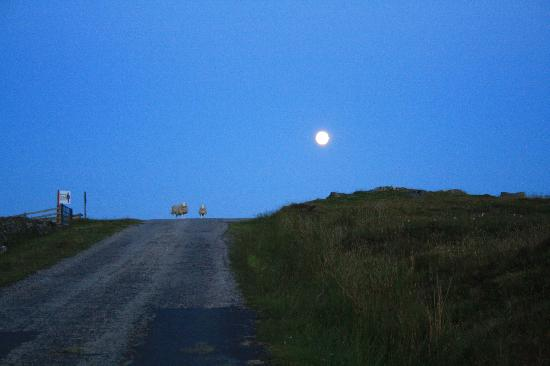 Nachts auf dem Weg nach Sharvedda