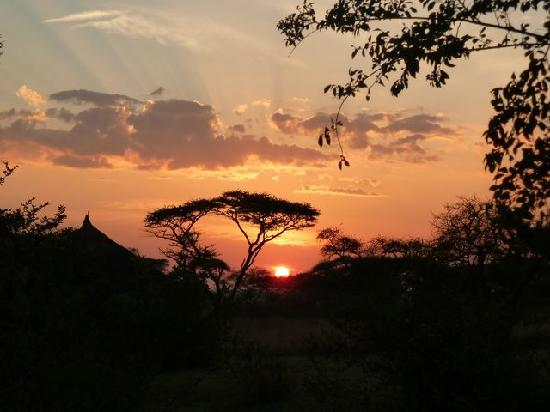 Ikoma Safari Camp: tramonto