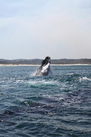 ‪كراي فيش لودج سي آند كانتري جيست هاوس: Whalewatching Walker Bay‬
