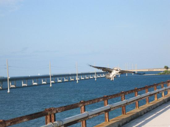 New & Old Seven Mile Bridge