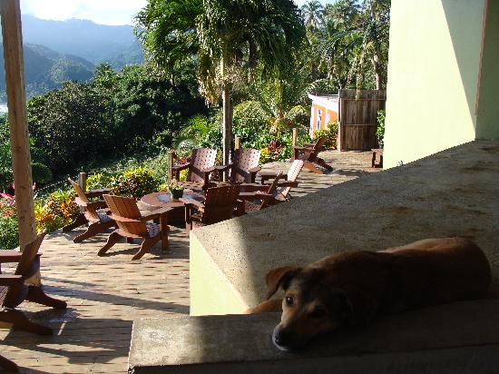 Pagua Bay House Oceanfront Cabanas: Chocolate, one of the Bar and Grill's rescue dogs, having a lazy start to the morning...