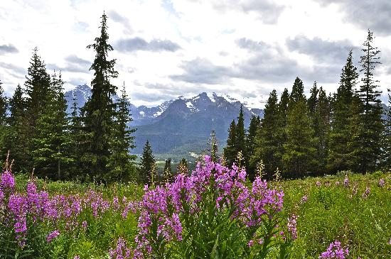 Banff, Canada: On Lake Louise ski hill looking towards Lake Louise