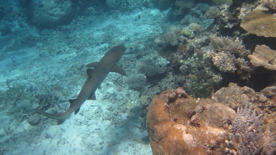 Koromakawa Resort: Here fishy fishy