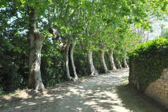 Moulin de la Roque: Walk to Noves down our plein tree lined drive