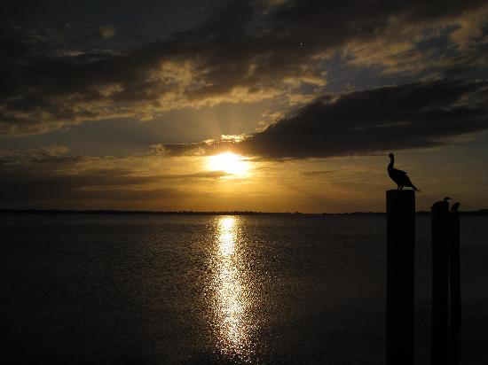Lake Dora : BEAUTIFUL sunset. Bring your camera!