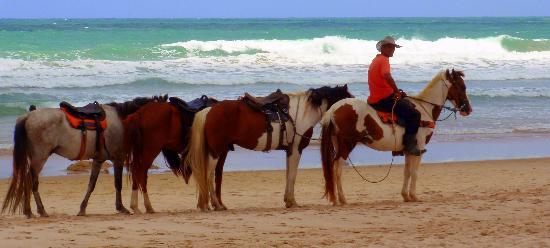 Village Porto de Galinhas: Caballos playa del hotel