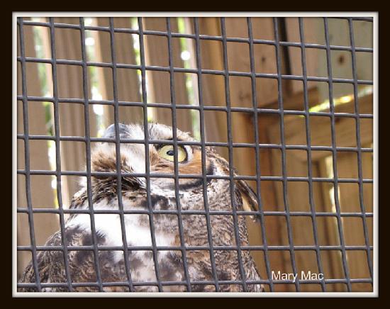 Marine Science Center: Bird Rehabilitation