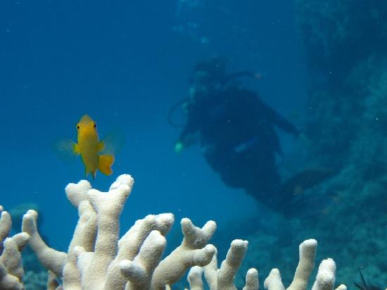 Unreal undersea world picture of pro dive cairns day - Pro dive cairns ...