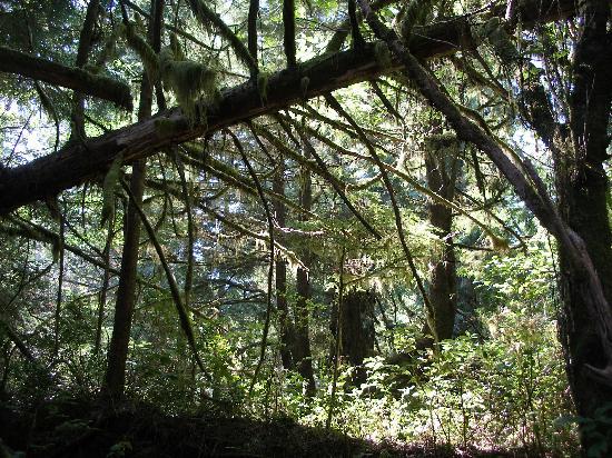 """Water's Edge Shoreside Suites: la forêt humide (""""rain forest"""")"""