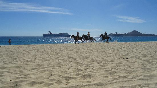 Hotel Riu Palace Cabo San Lucas: équitation plage Medano