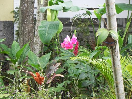 Auberge de la Langouste: Flores