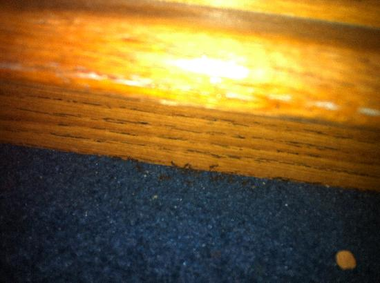 Marco Polo Motel: Ants in the room