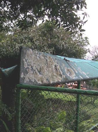 Hotel Desire Costa Rica: Moss growing on sunshade