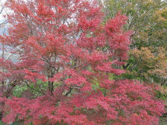 Izunokuni, Japan: 紅葉が見事