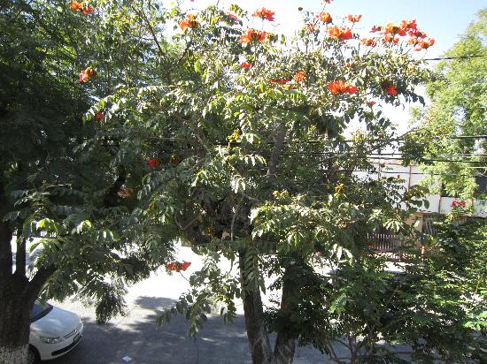"""Dickinson Guest House: This beautiful """"orange"""" tree outside of our bedroom window"""