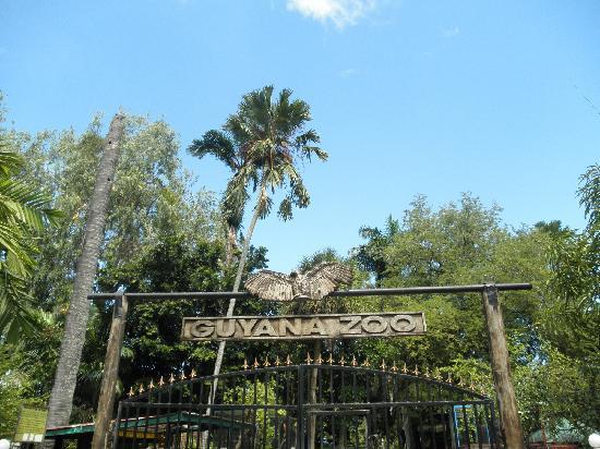 guyana zoo picture of guyana zoological park georgetown tripadvisor