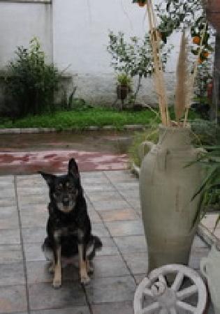 A Casetta Mia: Il nostro cane