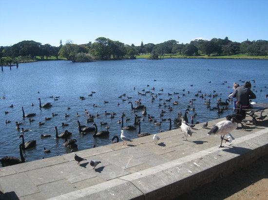 悉尼世纪公园