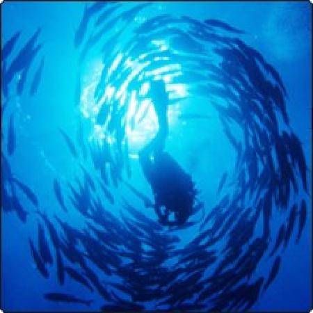 Dive The World: Surrounded by fish