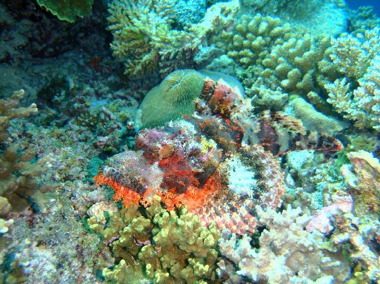 Diving Bluetribe Moofushi: Stonefish