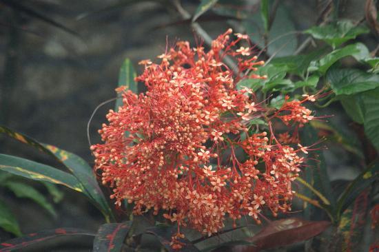 Guci Guesthouses: Blumen im Garten