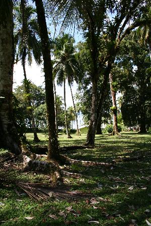 Saladero Eco Lodge: From the back of the cleared portion of their property towards the beach