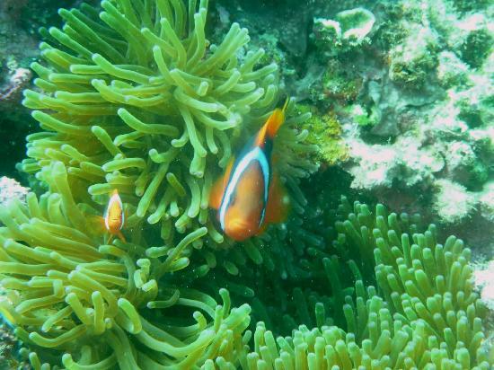 Easy Diving and Beach Resort: Nemo