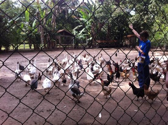 Hotel Fazenda Mazzaropi: alimentando os bichos