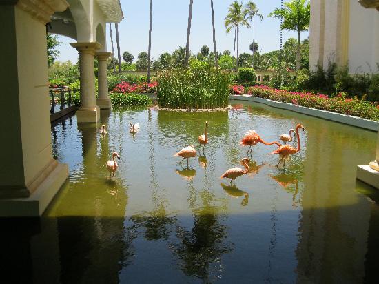 Iberostar Grand Hotel Bavaro: birds