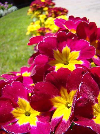 Belmond Hotel Monasterio: Flores del Hotel
