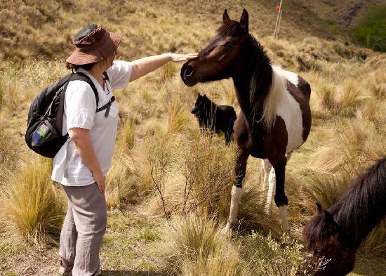 Estancia Altos del Durazno: Friendly horses