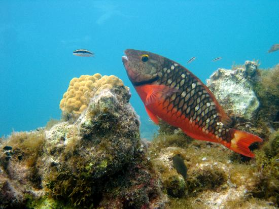 The Ritz-Carlton, Grand Cayman: Pic my snorkel instructor took during my swim