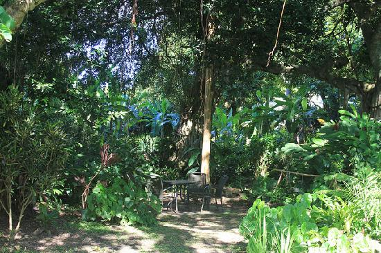 Banyan Tree Bed and Breakfast: The Banyan Tree!