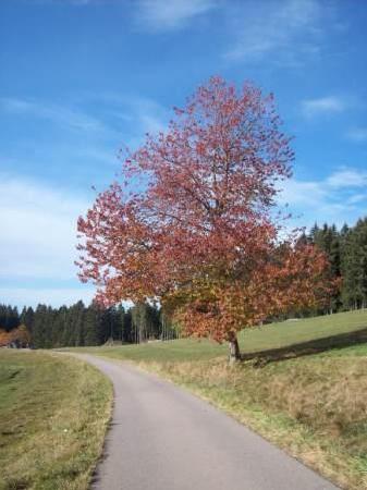 Restaurant - Cafe Alpenblick: Herbststimmung