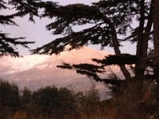 Tannourine Cedar Forest Nature Reserve: Vue depuis la forêt de Cèdres sur les monts enneigés