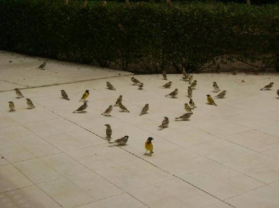 Hôtel Diamarek : à midi les oiseaux étaient tjrs au rdv