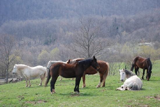 Agriturismo Il Cornacchino: I nostri cavalli vivono al pascolo