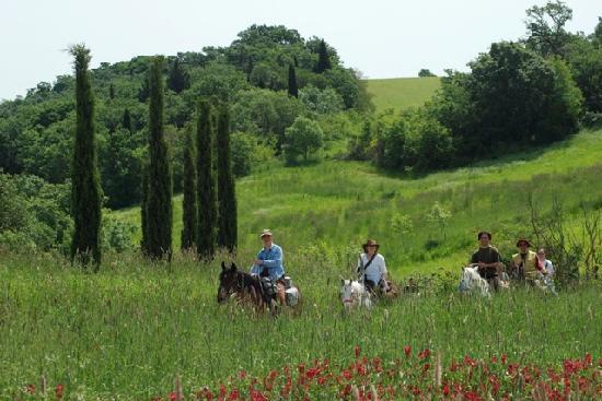 Agriturismo Il Cornacchino: Trekking a cavallo