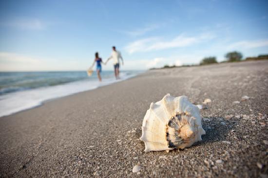 isla de Captiva, FL: Captiva Island Shelling