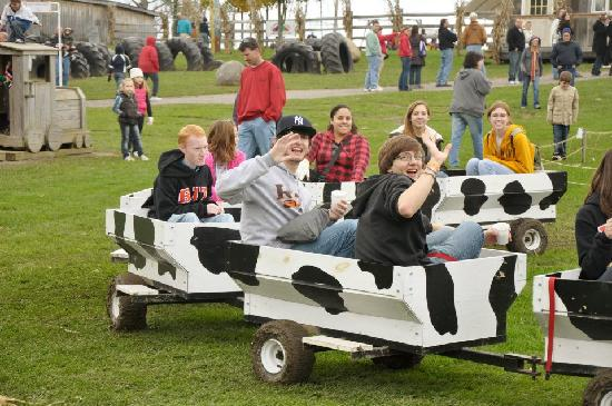 Long Acre Farms: The Cow Train