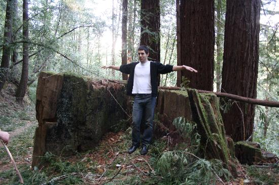 Henry Cowell Redwoods State Park: Really big stump